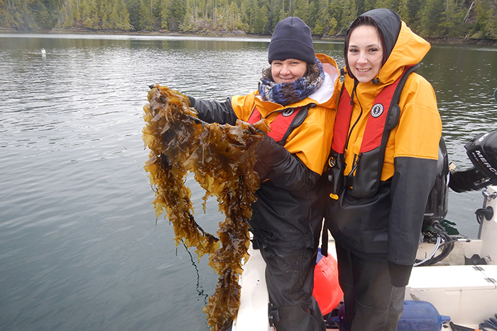 NIC students Jennifer Woodland and Mikaela Pettigrew hold up sugar kelp at one of the research sites.